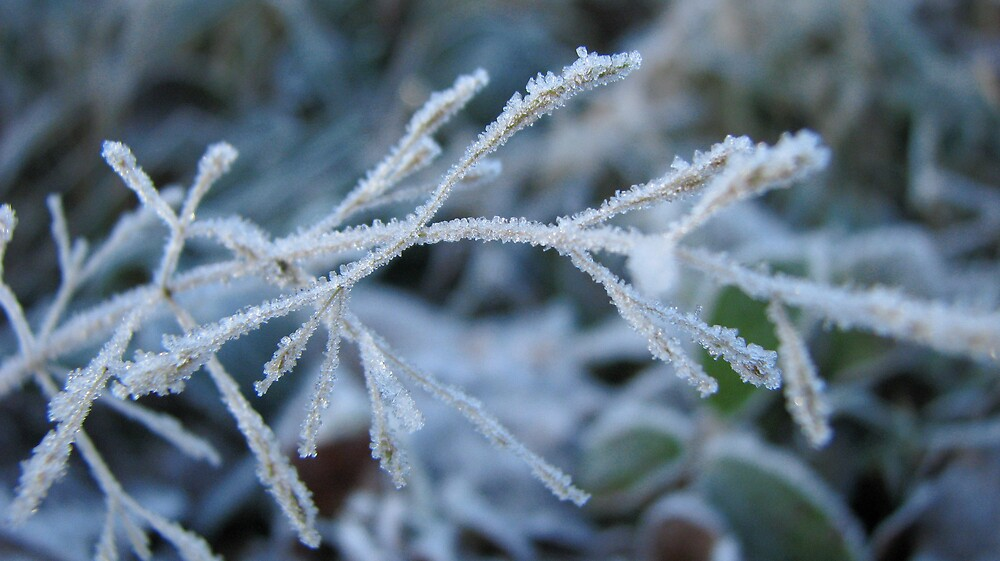 Frost by Sue Morhall