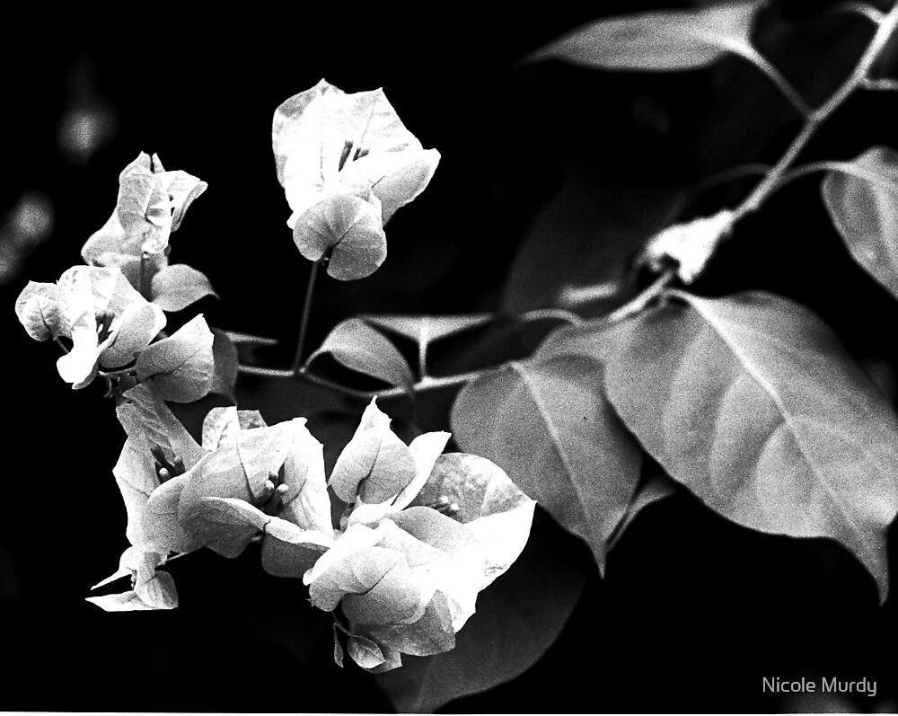 Flowers by Nicole Murdy