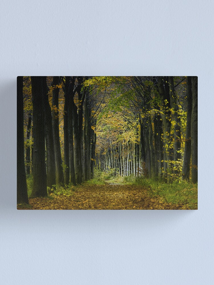Alternate view of Path, Woods Canvas Print