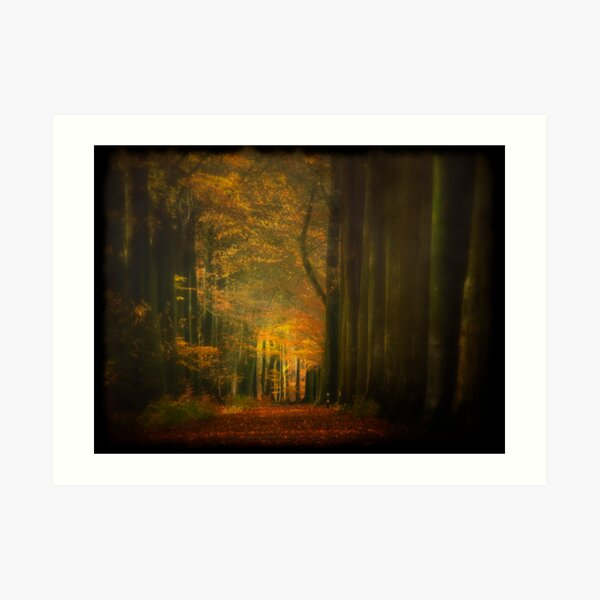 Misty light in woods  Art Print