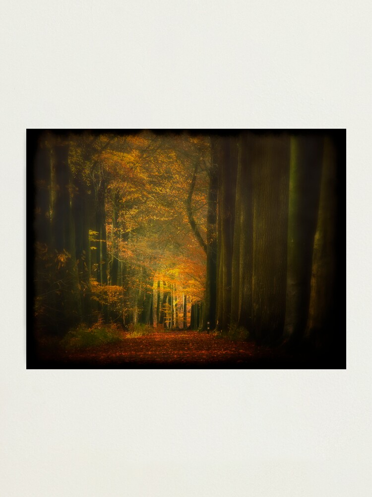 Alternate view of Misty light in woods  Photographic Print
