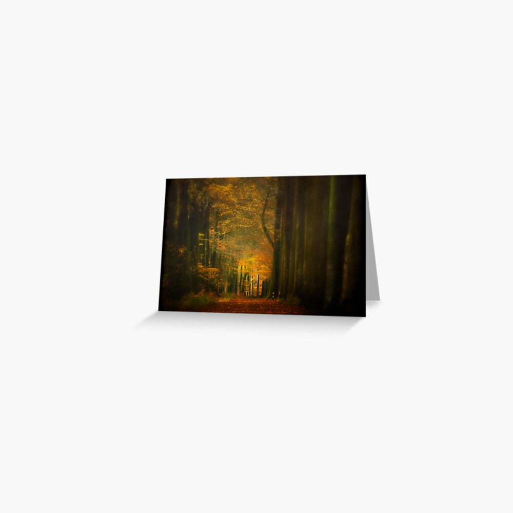 Misty light in woods  Greeting Card