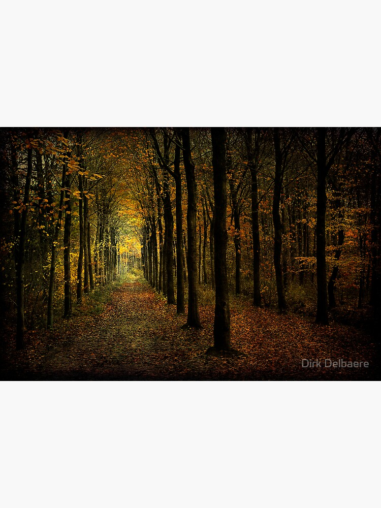 lots of trees by Delbaere