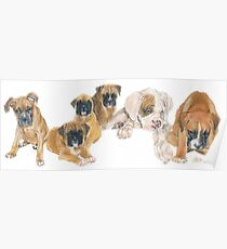 Boxer Puppies Poster