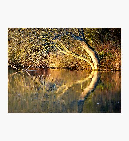 The river Thames at Pangbourne Photographic Print