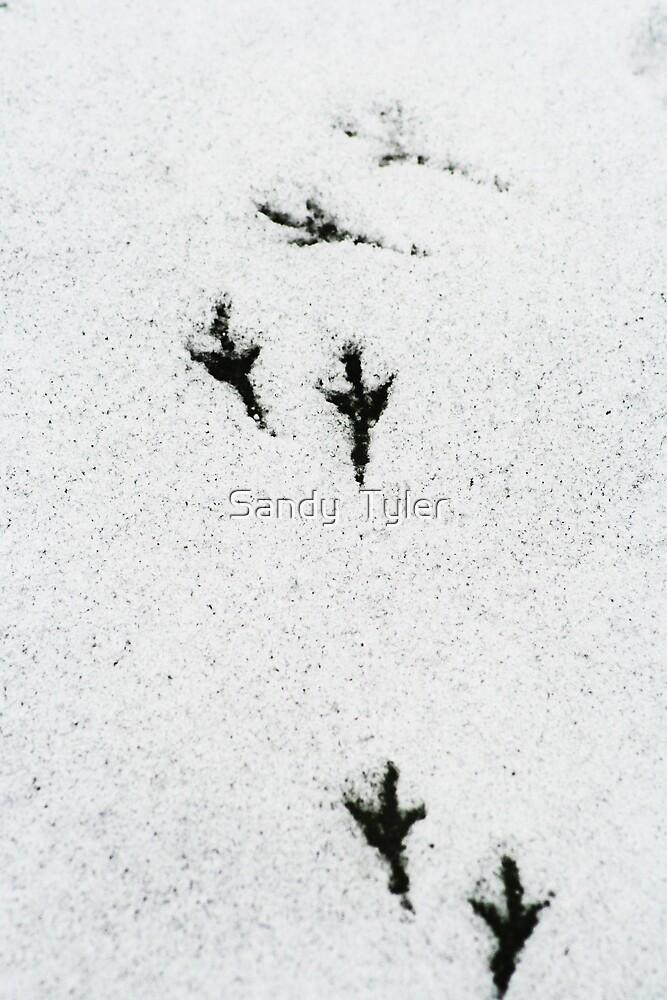 Bird tracks in the snow. by Sandy  Tyler
