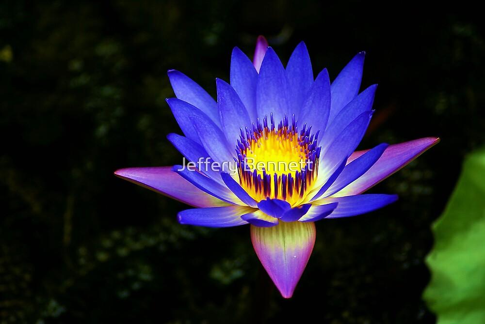 Purple Passion by Jeffery Bennett