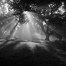 Enchanted I by NewDawnPhoto