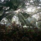Enchanted II by NewDawnPhoto