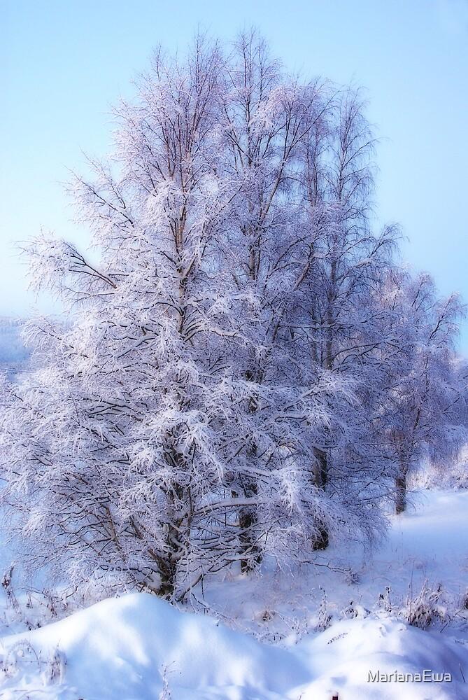 Winter Birch #1 by MarianaEwa