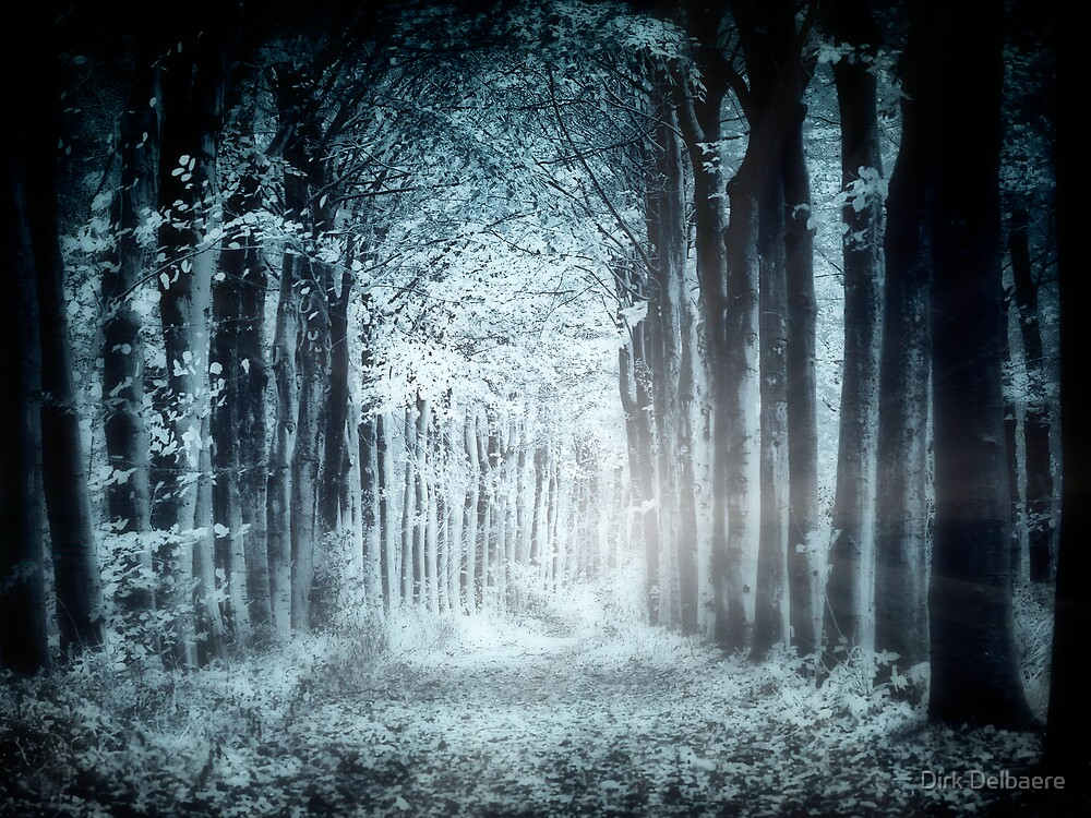 Night, Woods by Dirk Delbaere