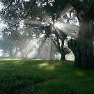 Bearing Witness by NewDawnPhoto