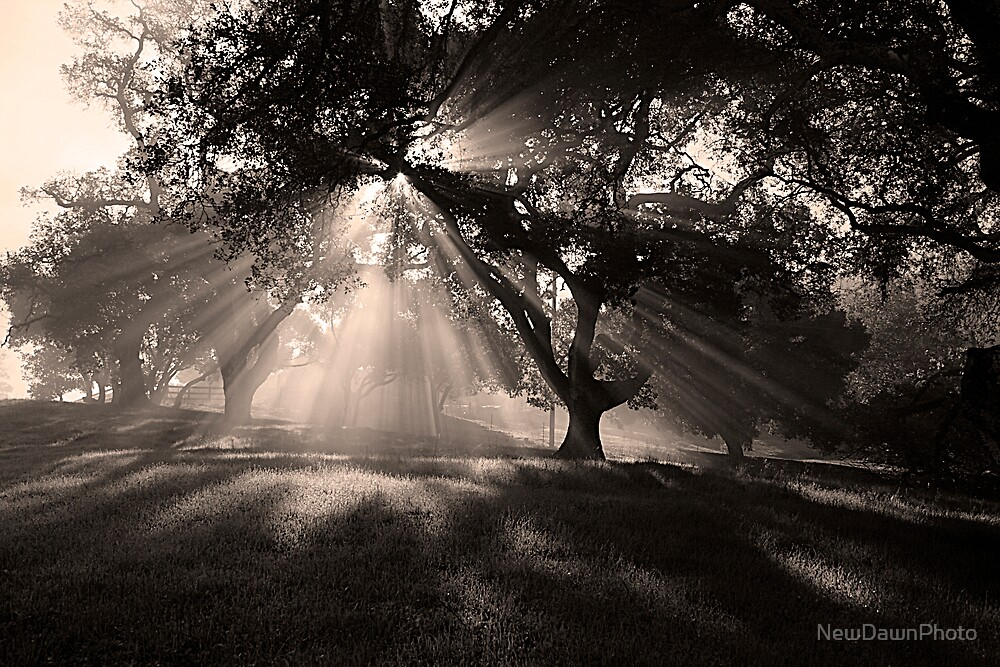 Timeless by NewDawnPhoto