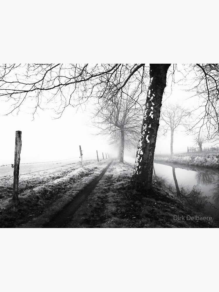Misty trees by Delbaere
