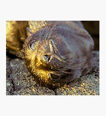 Galapagos Newborn Sea Lion Photographic Print