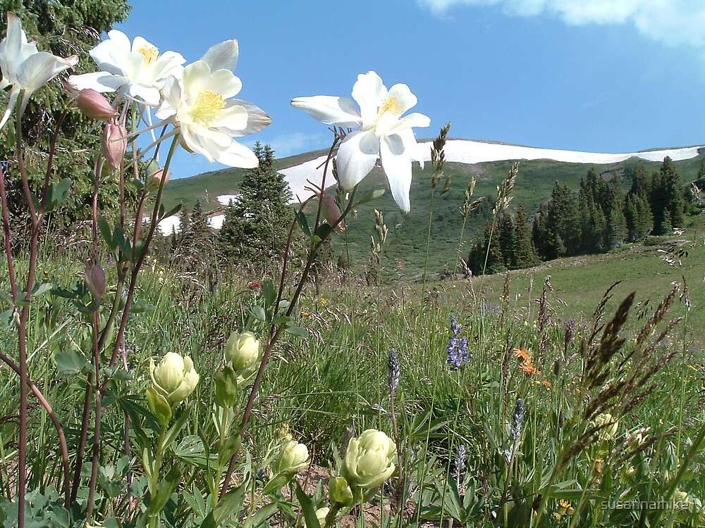 Mountains and Columbine by susannamike