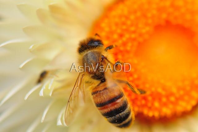 Bee by AshVsAOD