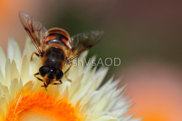 Another Bee by AshVsAOD