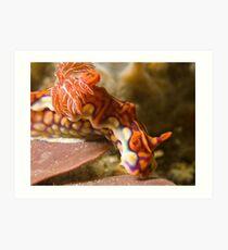 Miamira Magnifica Nudibranch Art Print