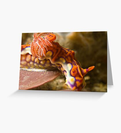 Miamira Magnifica Nudibranch Greeting Card
