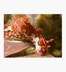 Miamira Magnifica Nudibranch Photographic Print