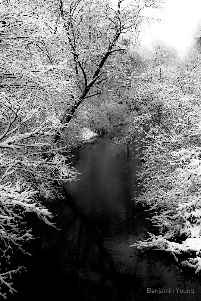 Natures Black and White by Benjamin Young