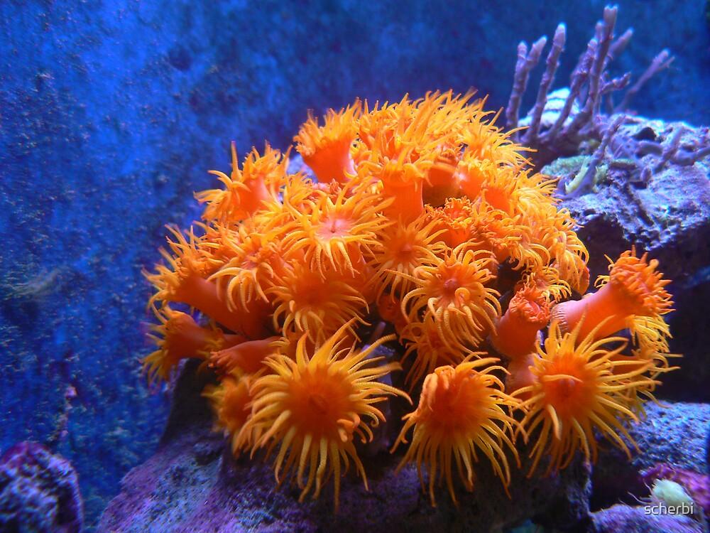 Orange Submarine by scherbi