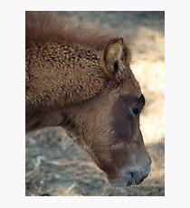 Baby Fur Photographic Print