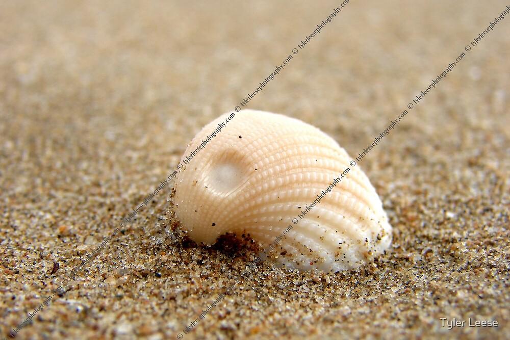 Beach Shell by Tyler Leese