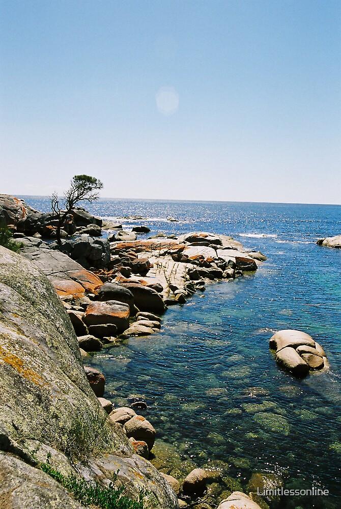 Tasmanian Beauty by Limitlessonline