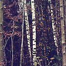 { tree dancers } by Lucia Fischer