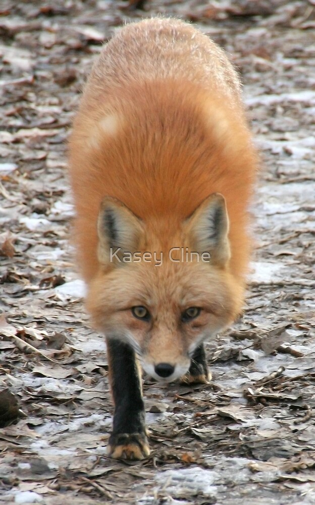 What are you looking at?? by Kasey Cline