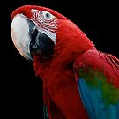 Green-Winged Macaw Parrot by taiche