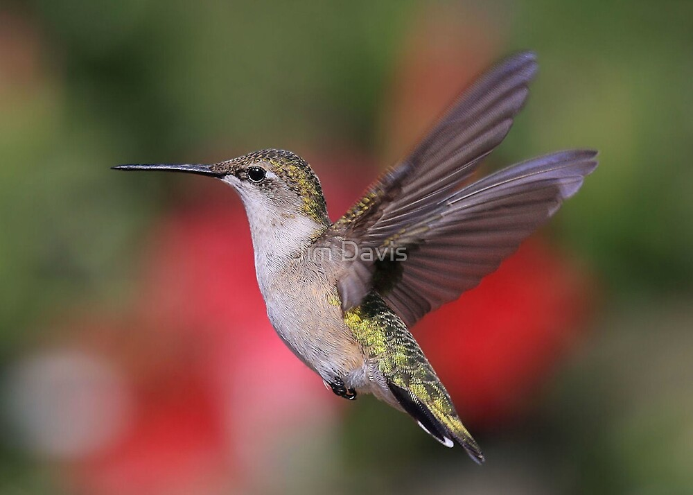 Our Little Hummer by Jim Davis