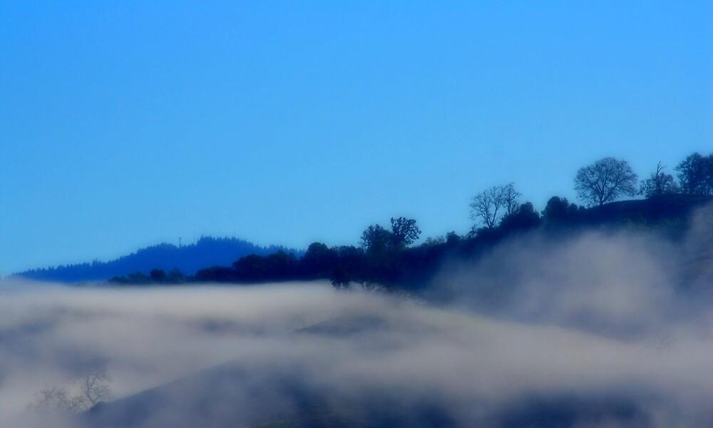Dreamy Fog by Jessica Hardin
