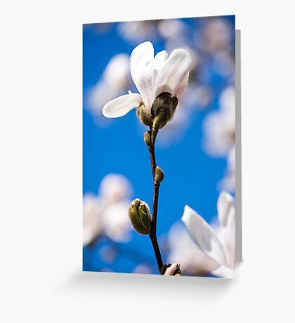 Nature's Confetti Greeting Card