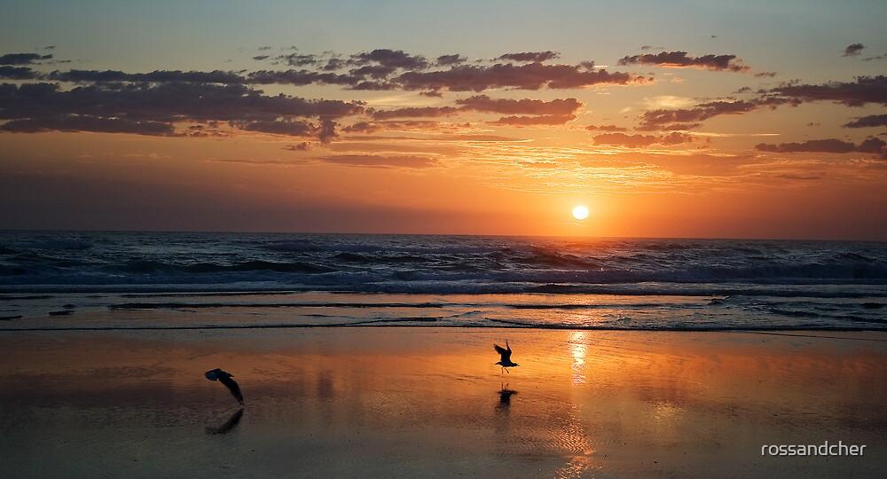 Golden Sunrise by rossandcher