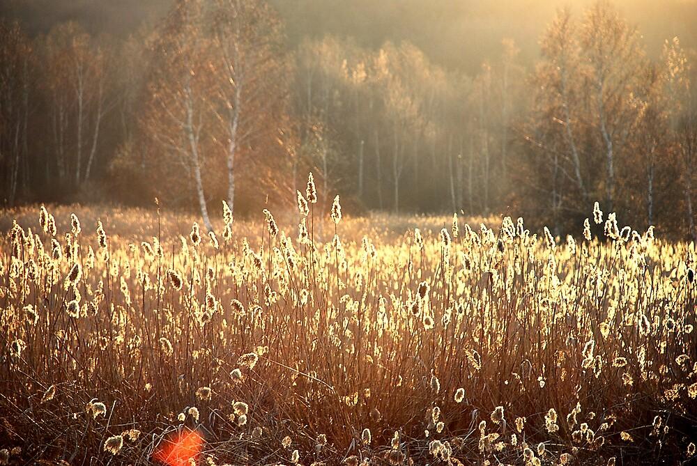 Golden Sunlight by jack8