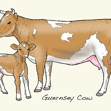 Guernsey Cow by lewisroland