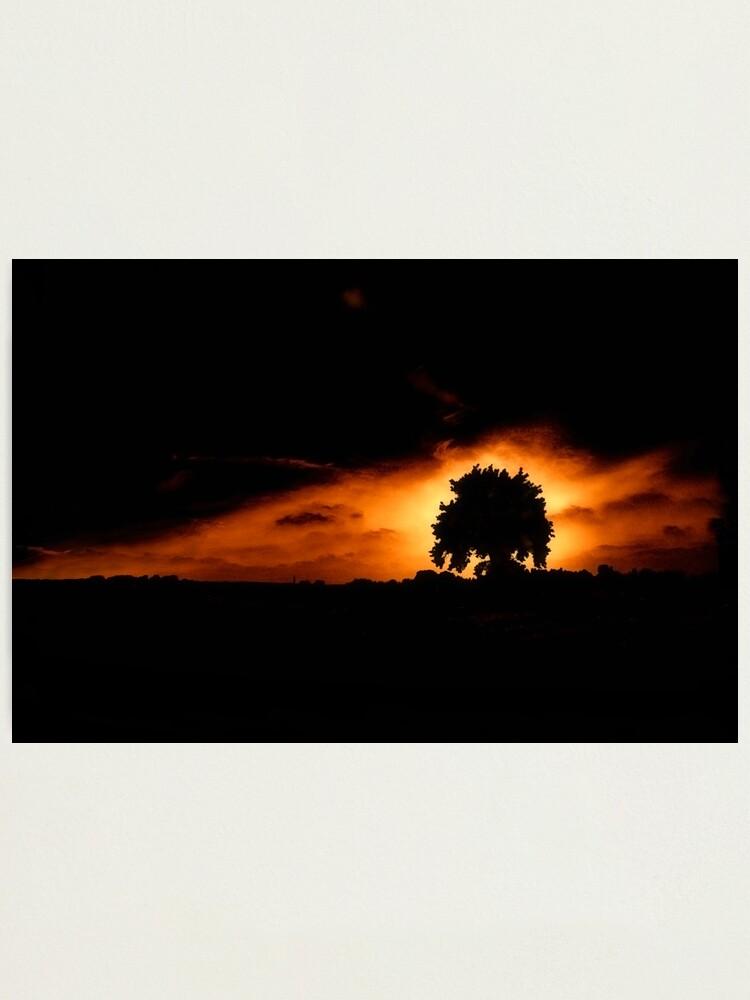Alternate view of Tree, Darkness Photographic Print