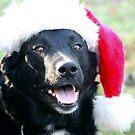 Santa Scooby  by Pamela Jayne Smith