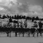 Menghini Apple Orchard by fsmitchellphoto
