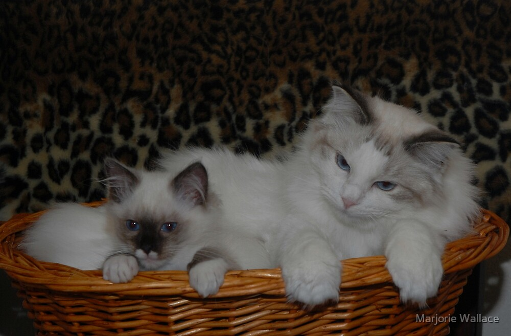 Basket Kitties by Marjorie Wallace