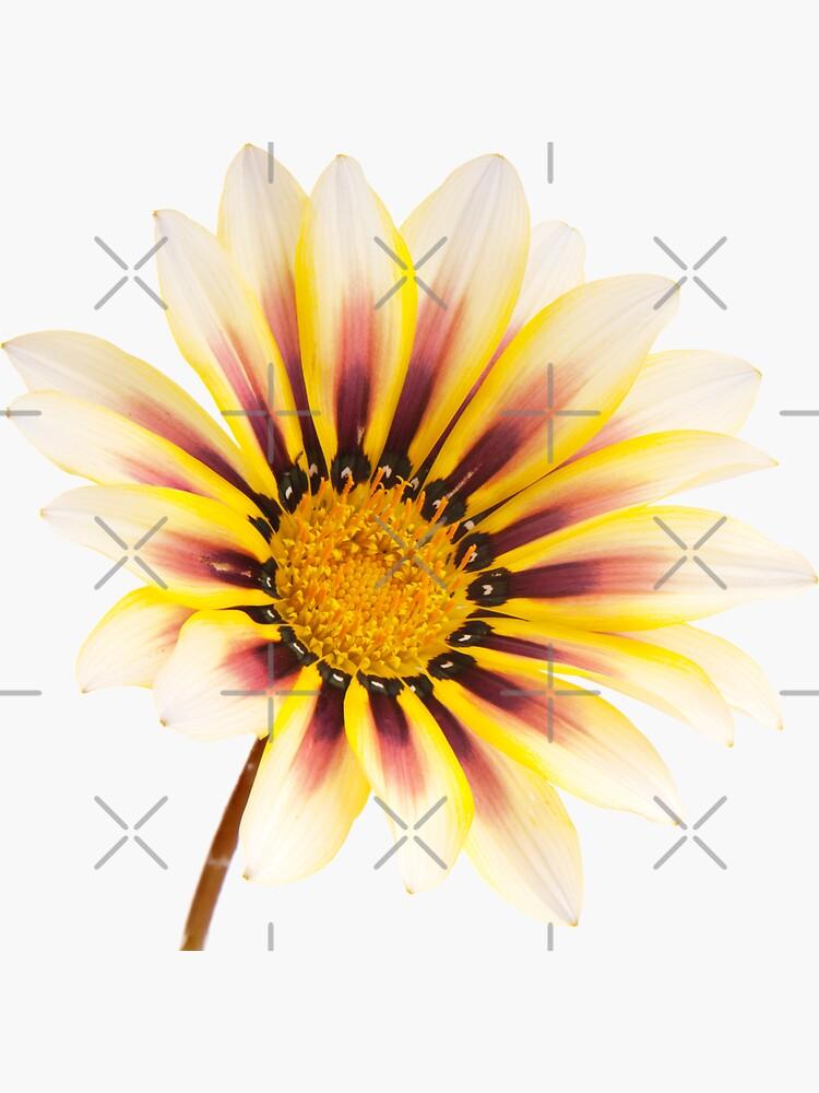 Yellow Wild Flower Pattern by THPStock
