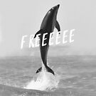 Free like a dolphin by annimo