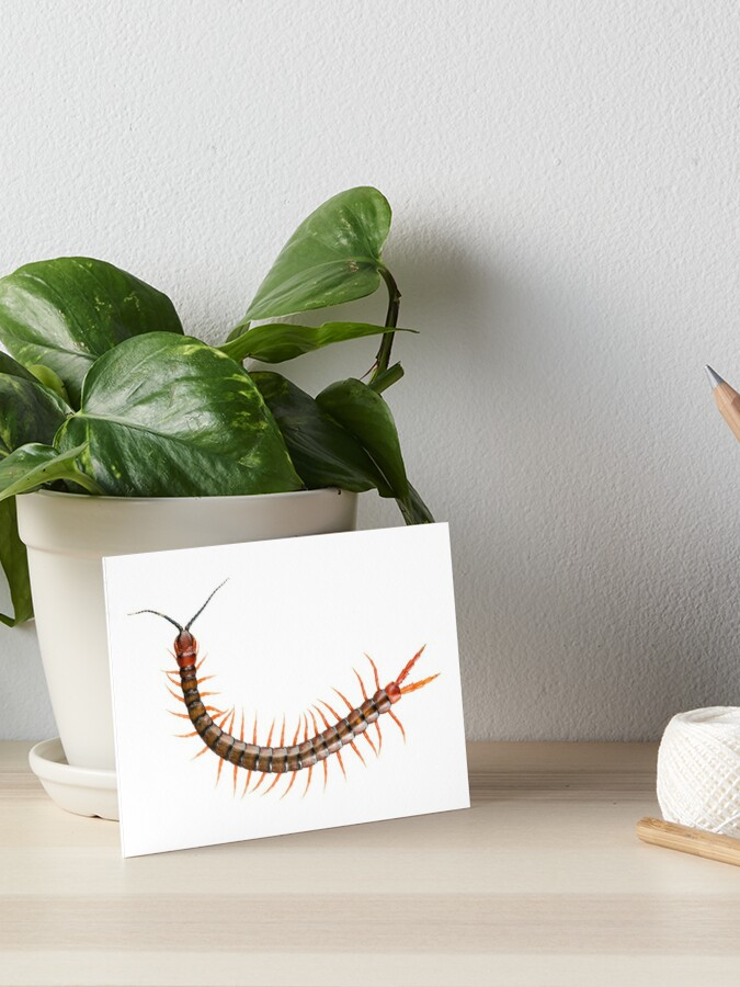 Giant Centipede Creepy Crawly | Art Board Print