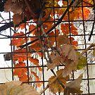 Grape Leaves in Fall by Sara Kheirdoust