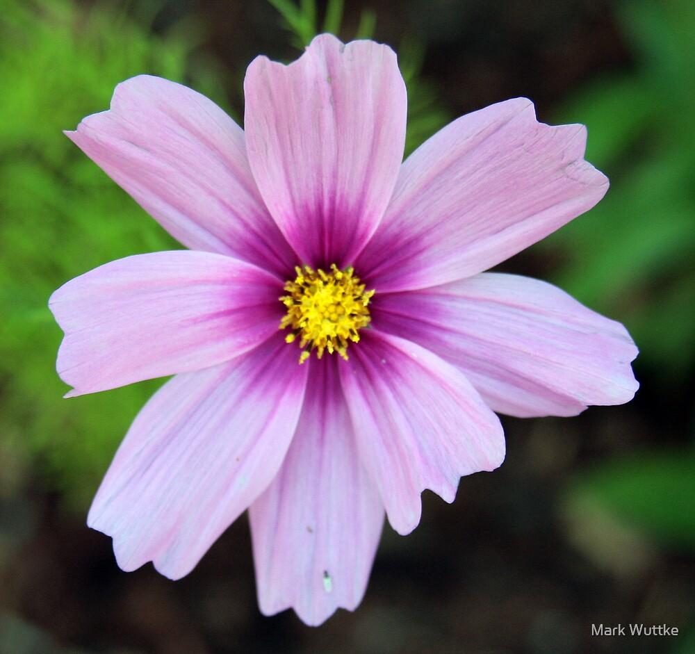 Purple Petals by Mark Wuttke