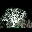 Winters Night Memories Of Spring by velveteagle