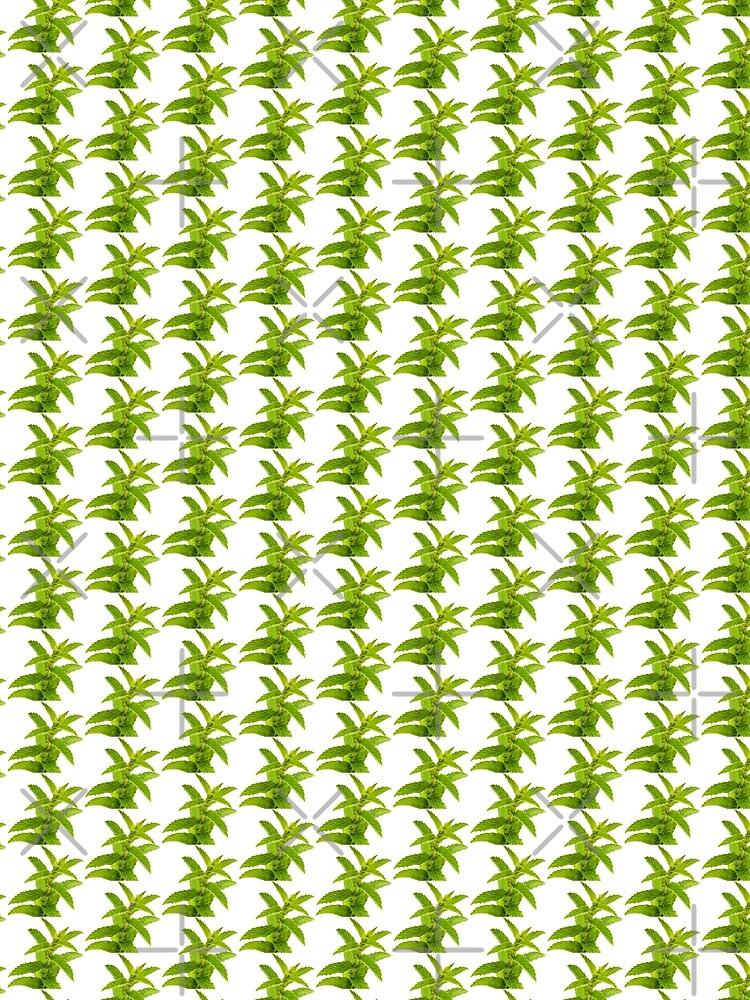 Fresh Mint Leaves Detail by THPStock